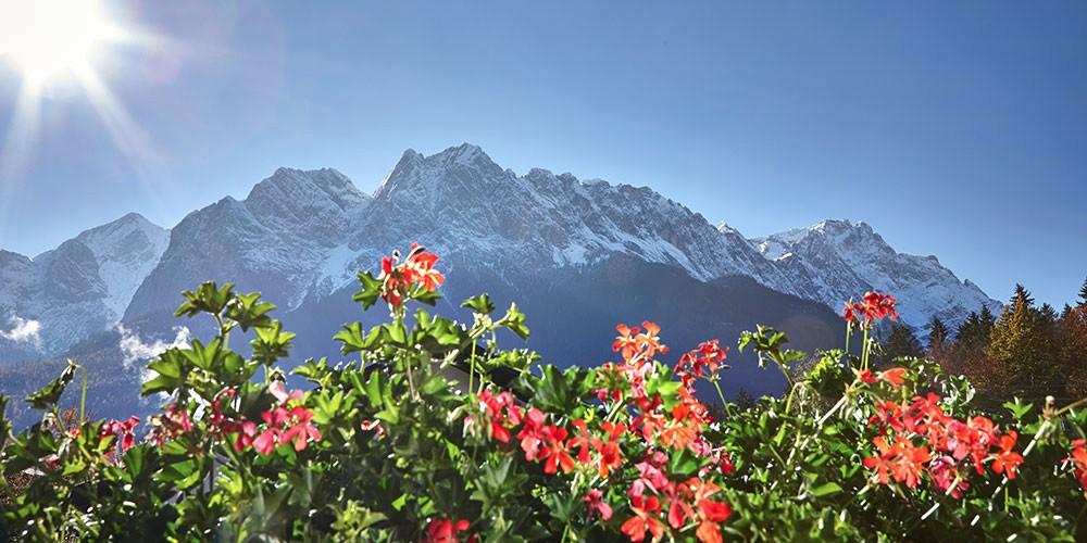 bergblick-blumen